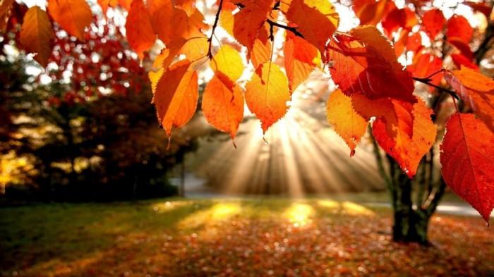 Lições de Outono